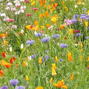 wild flower mixtures