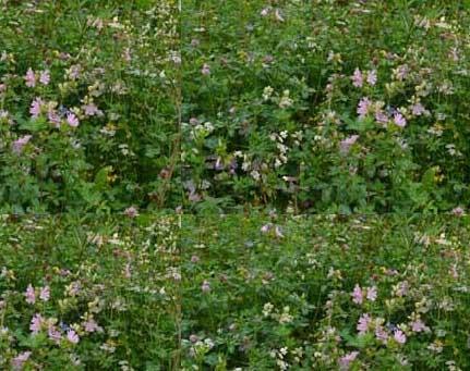 Woodland/shade mix